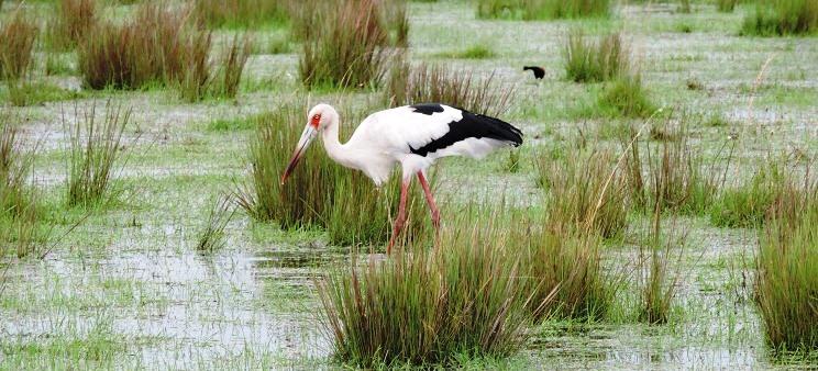 Aves de la reserva del Iberá
