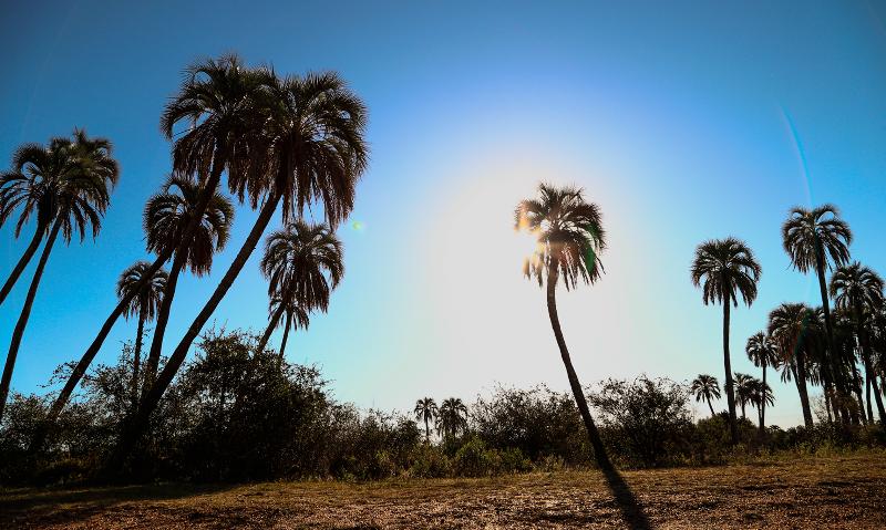 Palmeras de Yatay - Parque Nacional El Palmar