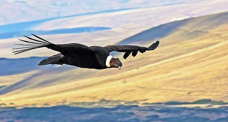 Esquel-Condor Bariloche Simpson (2)