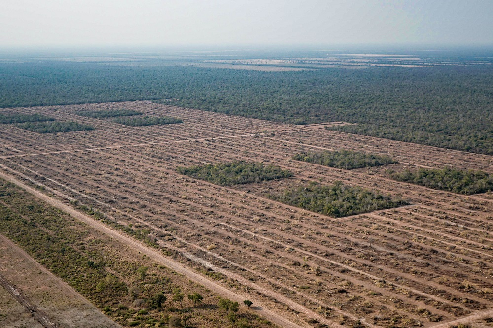El monitoreo de deforestación en el norte de Argentina que realiza Greenpeace reveló que, a pesar de las restricciones impuestas por la pandemia de COVID-19, entre el 15 de marzo y el 30 de septiembre de este año se desmontaron 42.565 hectáreas de bosques, una superficie similar a la de dos veces la ciudad de Buenos Aires. La organización ecologista reclamó que se prohíban y penalicen los desmontes e incendios.