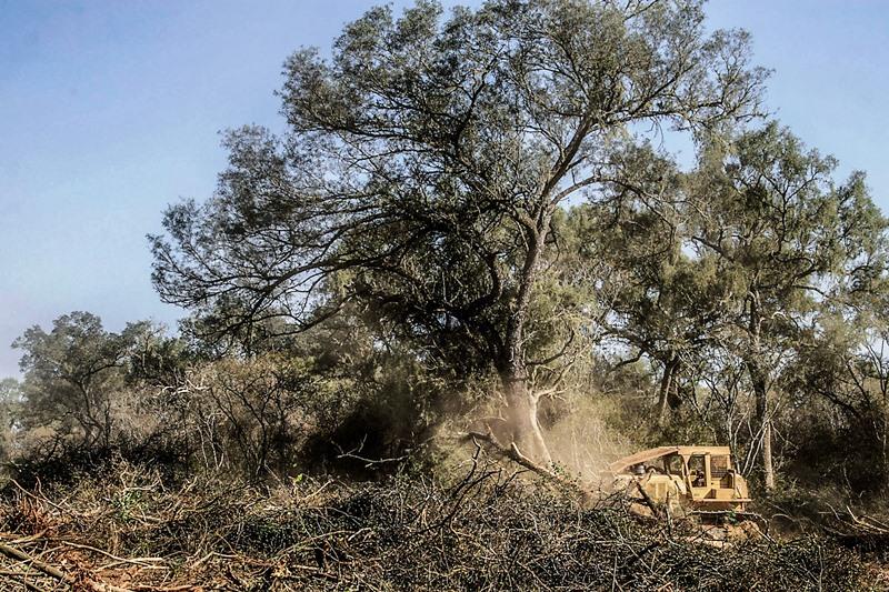 Jaguares bloquean topadoras en Salta